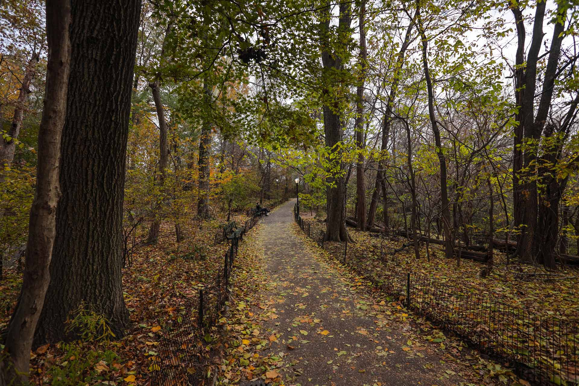 Central-Park-Nyc-Manhattan-fall-colors-1